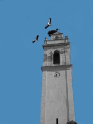 Animais/Torre das cegonhas