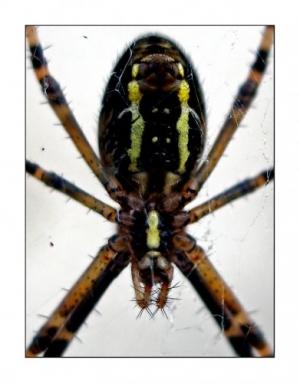 Macro/Aranha...