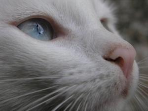 /Retrato de um Gato Contemplativo