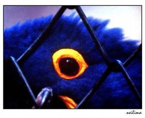 Outros/Olho da arara