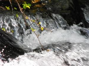 Paisagem Natural/Água cristalina