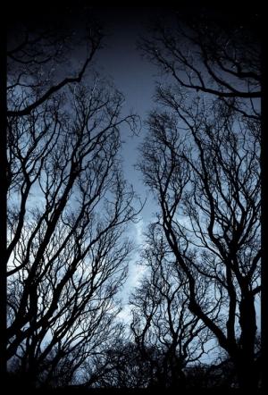 Paisagem Natural/Olhar para o ar