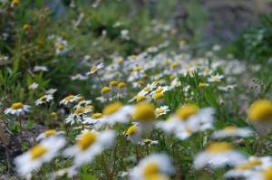 Paisagem Natural/Primavera a branco e amarelo