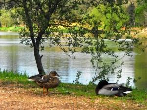 Paisagem Natural/O namoro à beira do lago ...