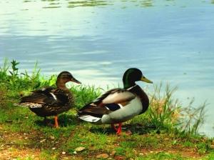 Paisagem Natural/Amor é ambos a olhar na mesma direcção