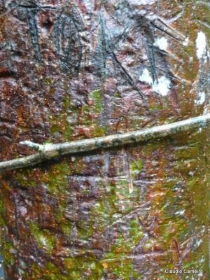 Paisagem Natural/Natureza Rupestre
