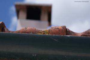 Outros/telhas com história