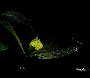 Macro/.:: Pure Dark Nature ::.