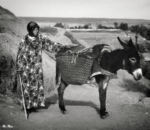 /Terras de Alah II