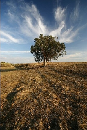 /A árvore