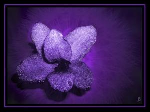 /A Violeta
