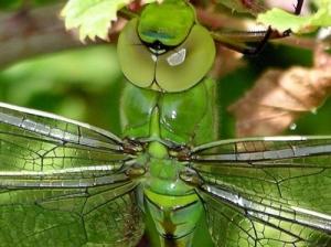 /Bugs IV