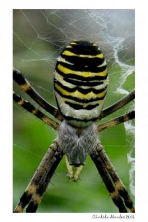 Macro/Spider men