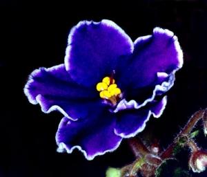 /Púrpura
