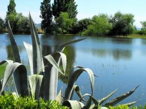 """Paisagem Natural/Natureza """" azul e verde"""""""