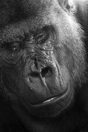 Animais/imagens do mundo animal - Toque de Midas