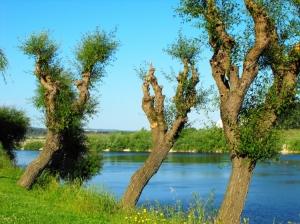 Paisagem Natural/A natureza  na margem do Tejo ...