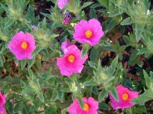 Outros/Poesia cor-de-rosa