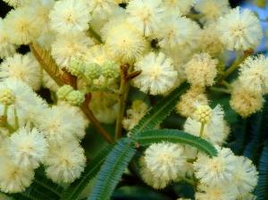 Outros/Delicadeza em flor II