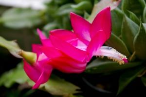 Outros/Flor de maio