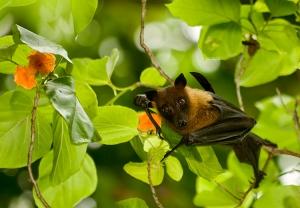 Animais/Bat