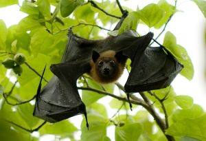 Animais/Bat#1