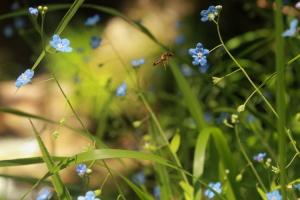 Macro/Uma flor... uma pequena flor