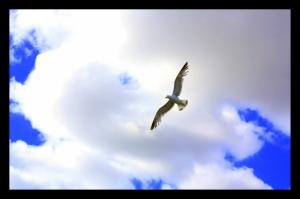 Outros/Uma gaivota voava, voava...