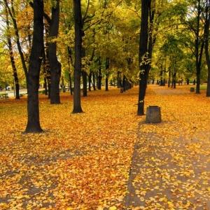 /_poesia no Outono_