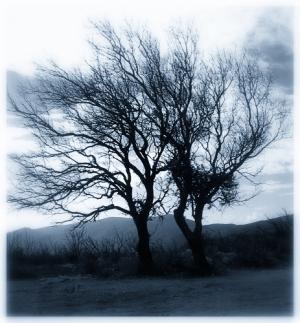 """/""""Árvores mistério..."""""""