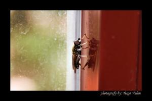 Animais/mosca e seu reflexo