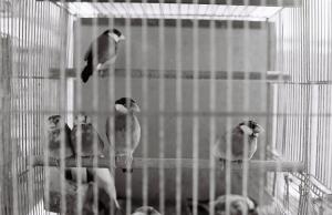 Animais/NO BIRDS