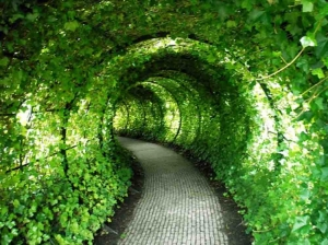 Outros/Green Tunnel