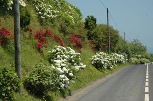 Paisagem Natural/Rosas de S.João