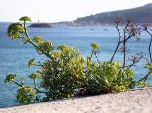 Gentes e Locais/A simple plant