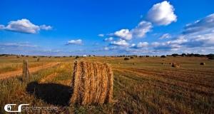 Gentes e Locais/Agricultura