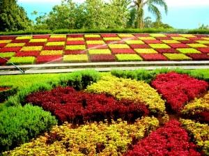 Outros/Jardim Botânico- Madeira