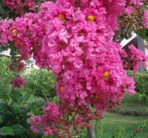 Paisagem Natural/Um ramo florido