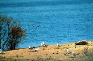 Paisagem Natural/Ilhas das aves