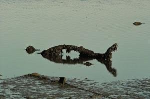Outros/Peixe