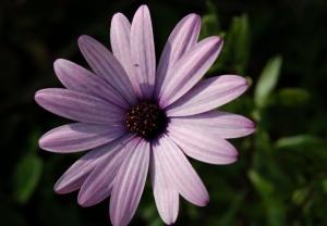 Macro/Uma flor