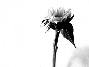 /Uma flor para ti...