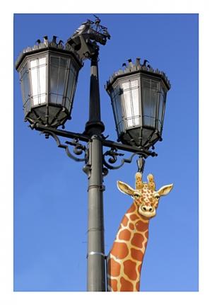 /Visite o Zoo