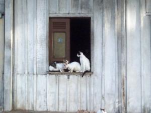 Animais/observando o movimento..