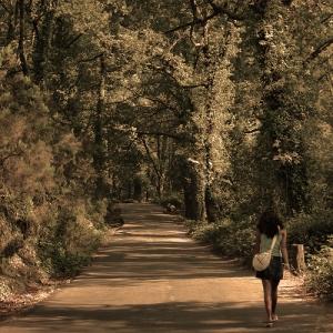 Paisagem Natural/Percorrendo o caminho da vida