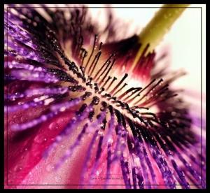 /Detalhes de uma flor 8