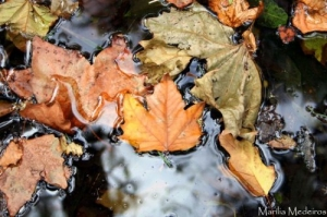 Outros/Outono... está em todo o lado