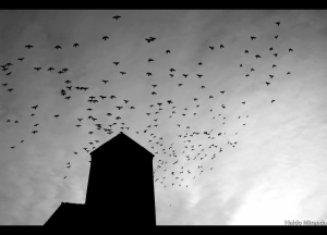 /- Fotojornalismo por Naldo Miranda -