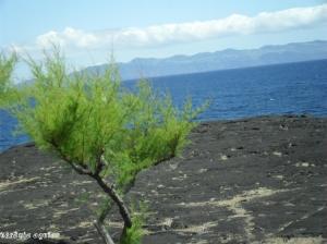 Paisagem Natural/Ilhas