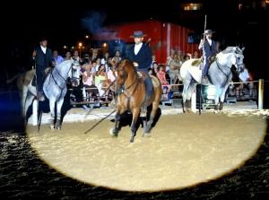 Animais/o cavalo